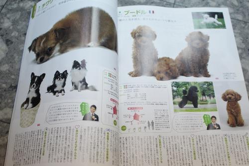犬のカタログ-2016-5