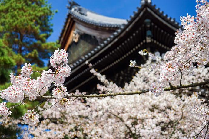 0407京都4月-30