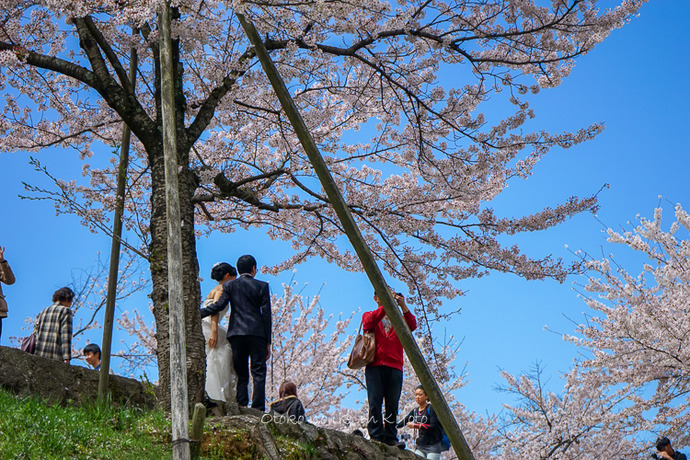 0407京都4月-47
