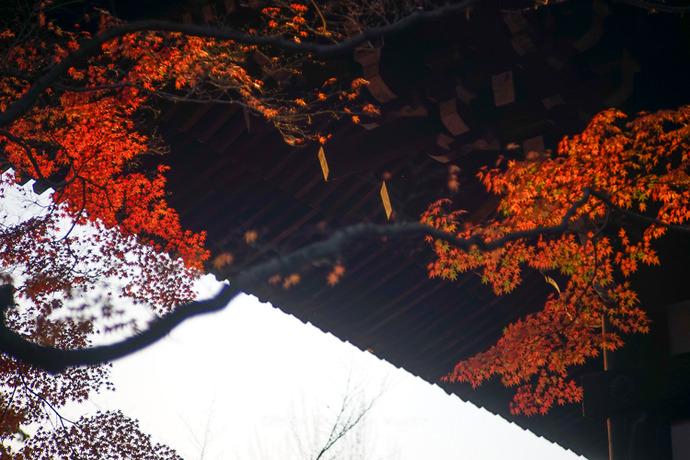京都112511月-30
