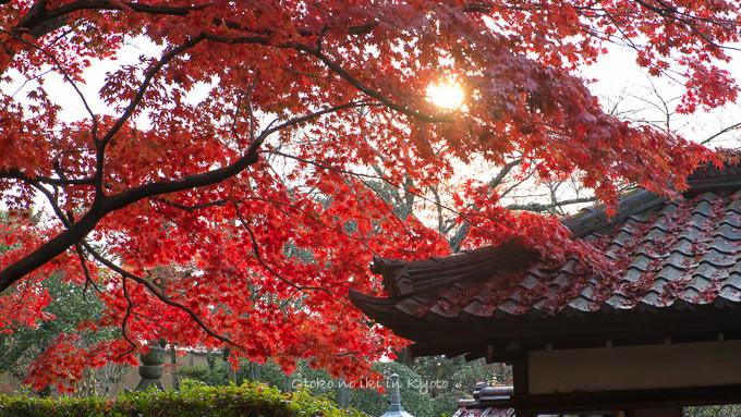 0602京都11月-10