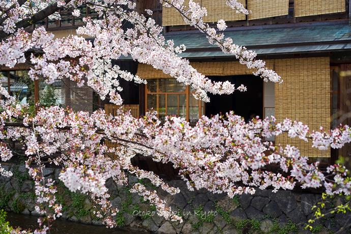 0407京都4月-7