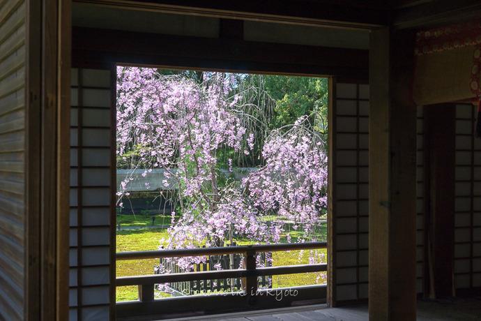 0407京都4月-39