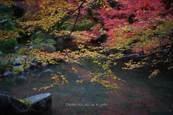 1124京都11月-14