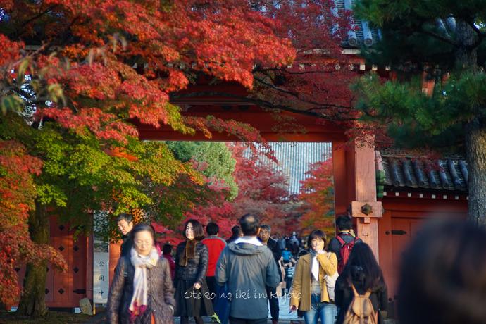 京都112511月-14
