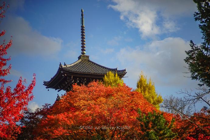 1123京都11月-13