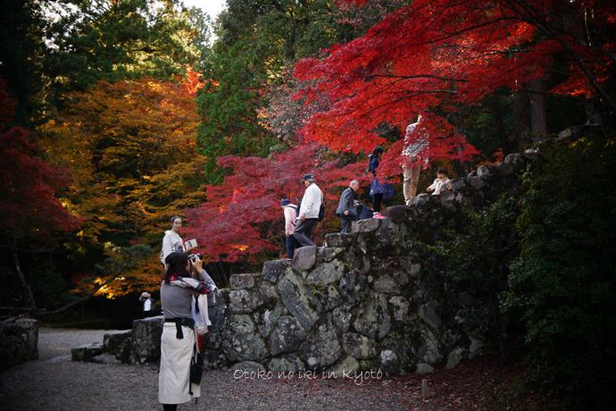 そうだ京都いこう20192019-78