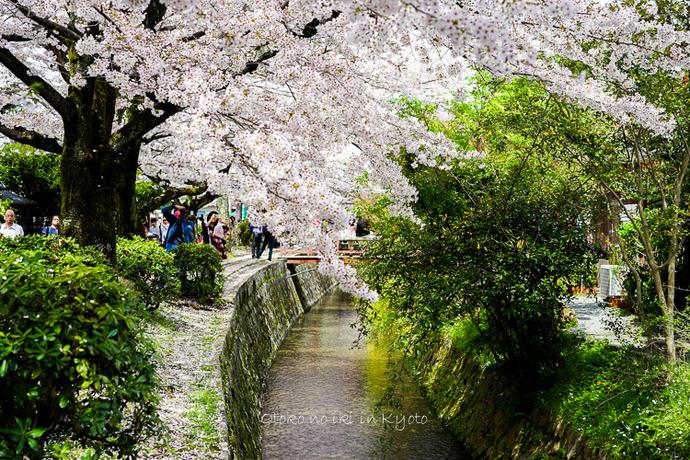 0407京都4月-74