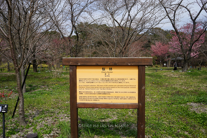 0329京都3月-59