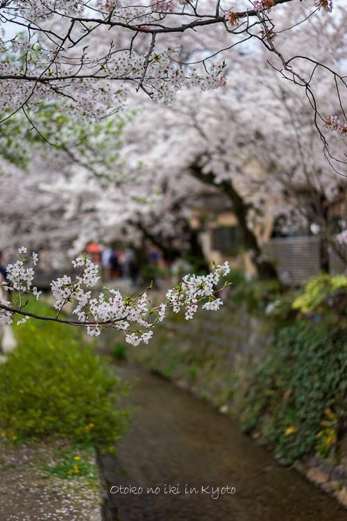 0407京都4月-89