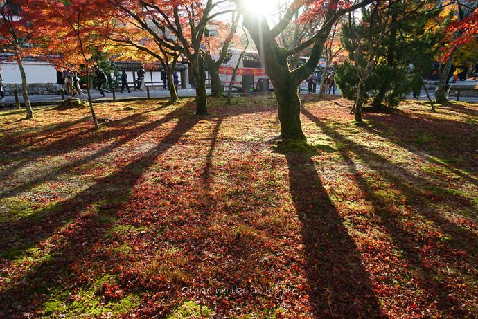 1123京都11月-23