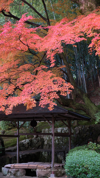 0602京都11月-7