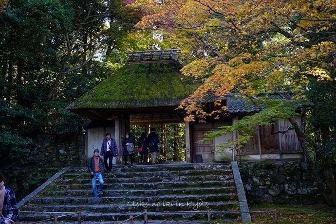 1123京都11月-17