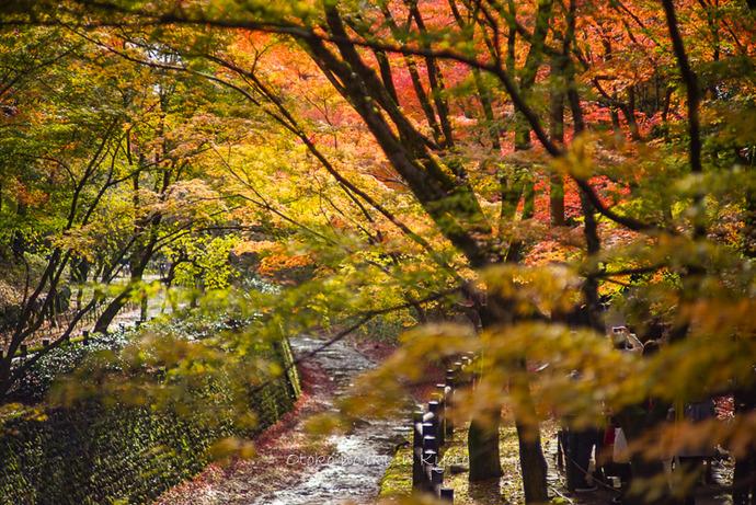 1123京都11月-9
