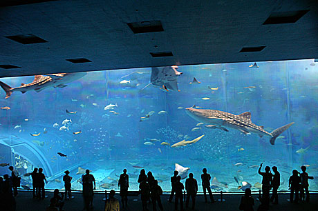 美ら海 巨大水槽
