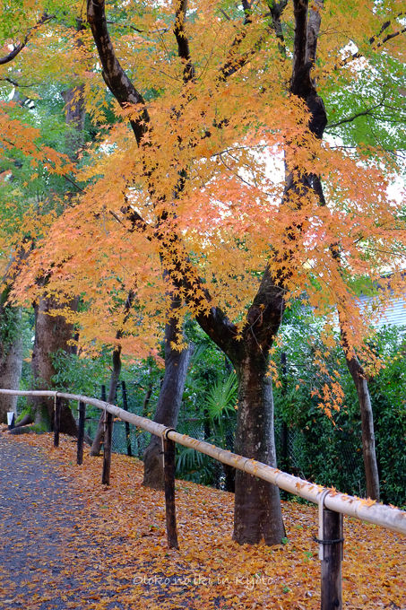 11月京都2012北野天満宮-11