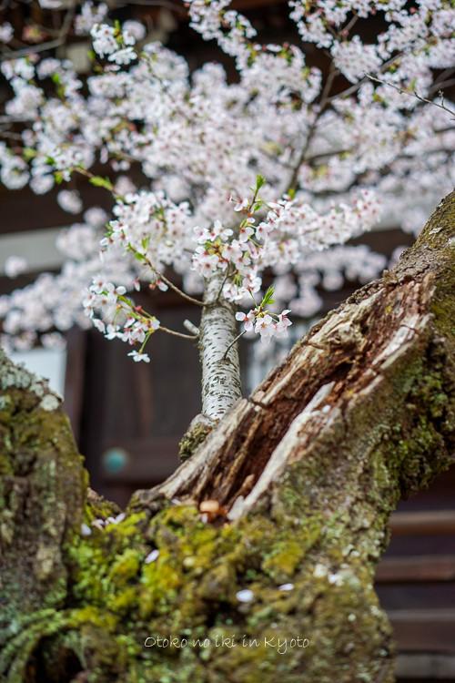 0407京都4月-97