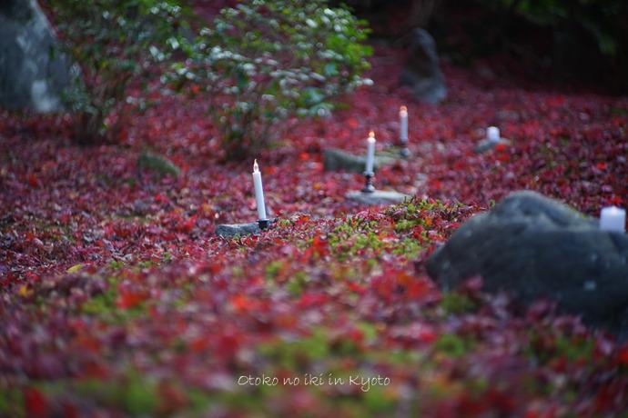京都112511月-10