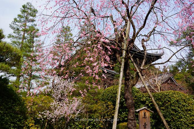 0324京都3月-27
