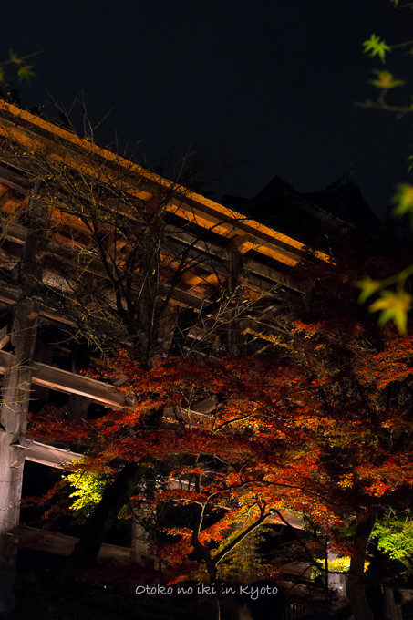 1123清水寺11月-15