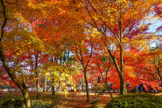 1124京都11月-23