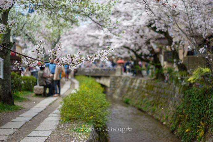 0407京都4月-88