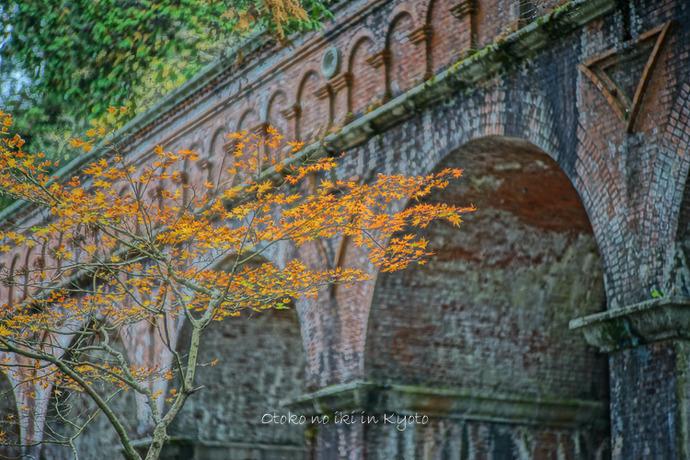 京都1125朝11月-12