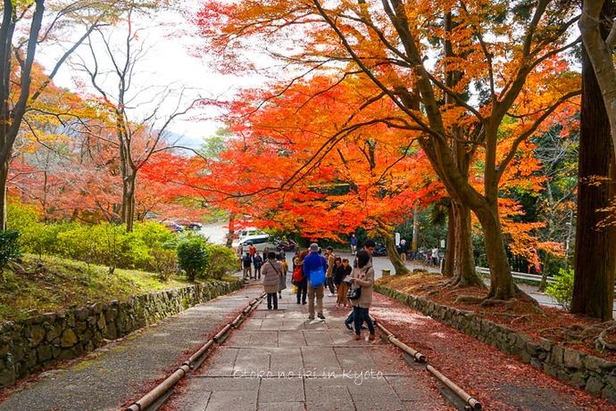 1124京都11月-26