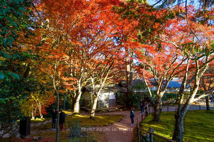 そうだ京都いこう20192019-87
