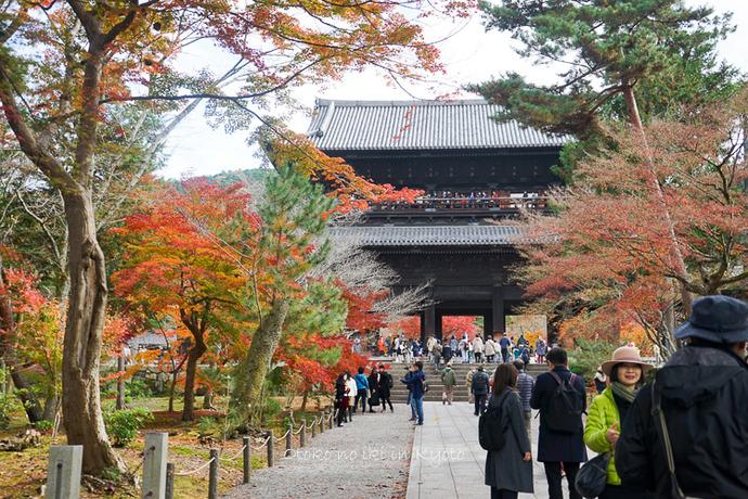 京都1125朝11月-3