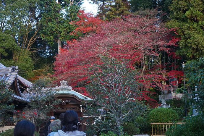 京都112511月-1