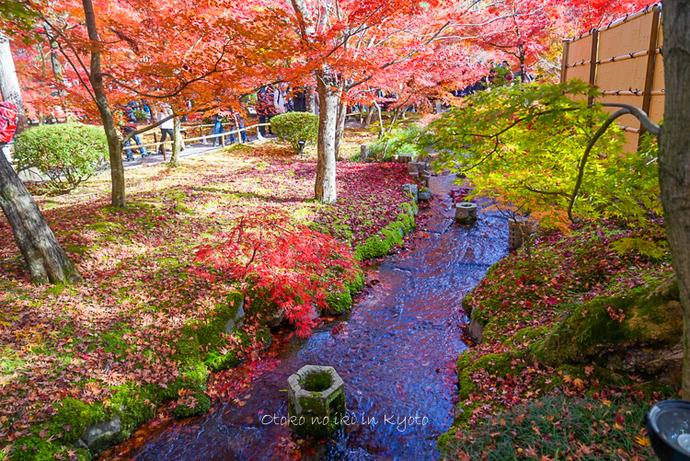 1124京都11月-22