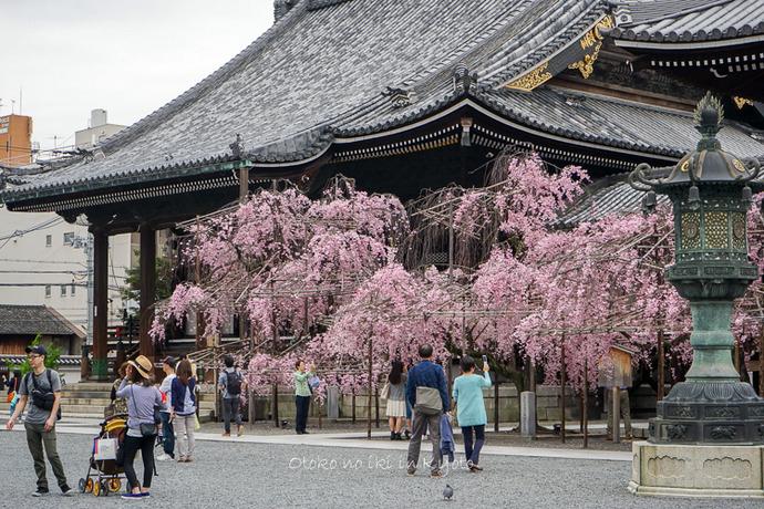 0407京都4月-114