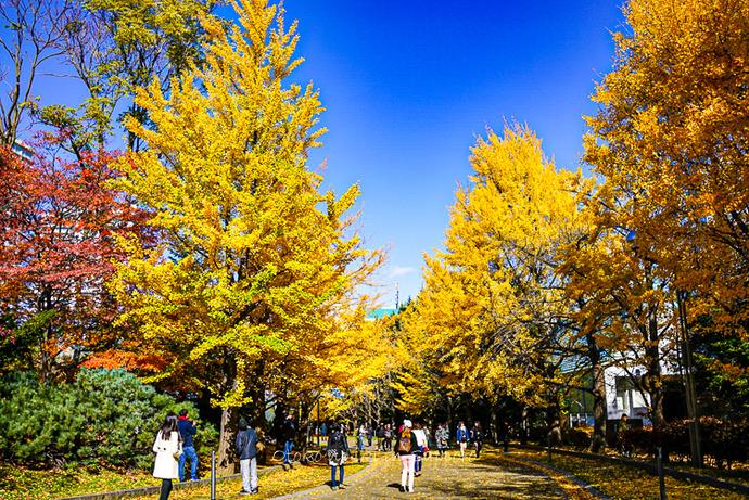 札幌余市2019-48