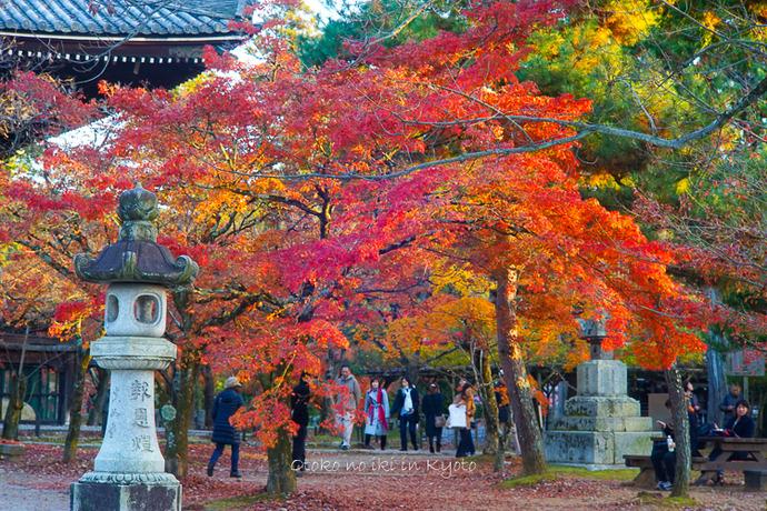 京都112511月-21