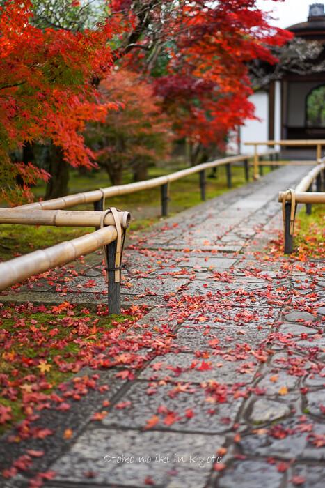 そうだ京都いこう20192019-231