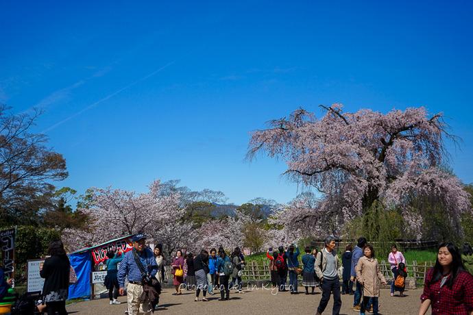 0407京都4月-18