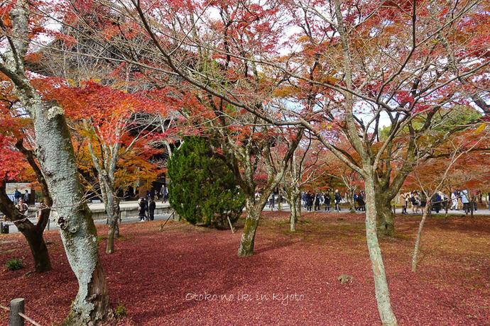 京都1125_RX100朝11月-4