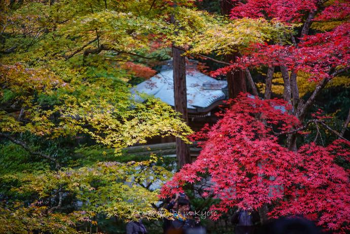 紅葉京都11月-5