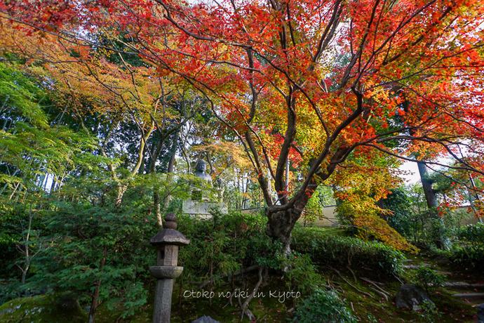 1108京都11月-48