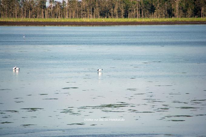 1130-2風蓮湖