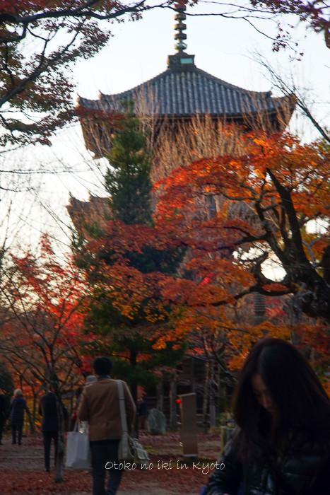 京都112511月-24