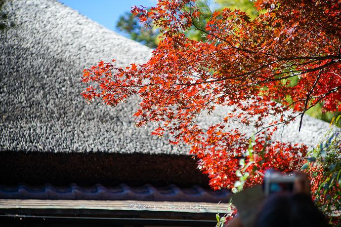 そうだ京都いこう20192019-29
