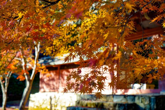 そうだ京都いこう20192019-77