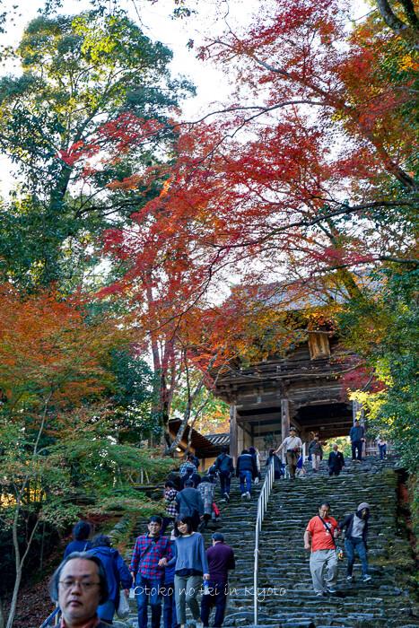 そうだ京都いこう20192019-73