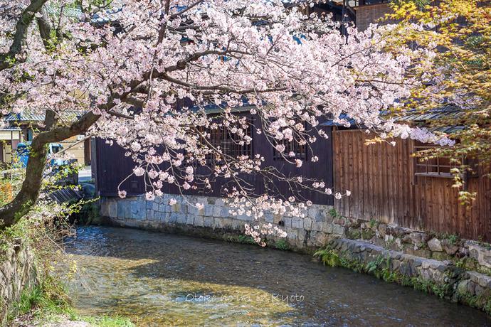 0407京都4月-12