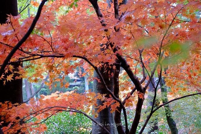 11月京都2012北野天満宮-3