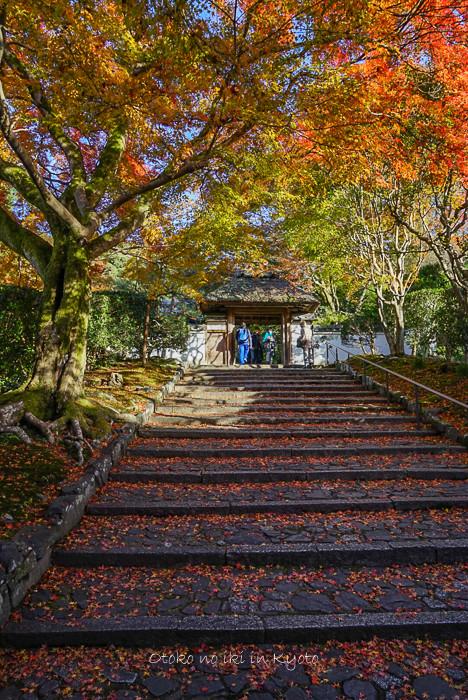 1123京都11月-18