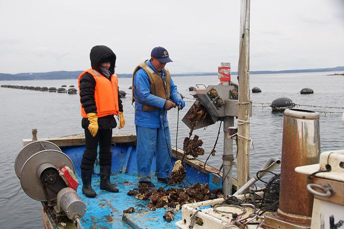1110牡蠣漁2016-7