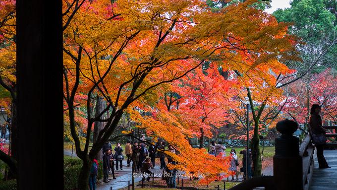 1128京都-7